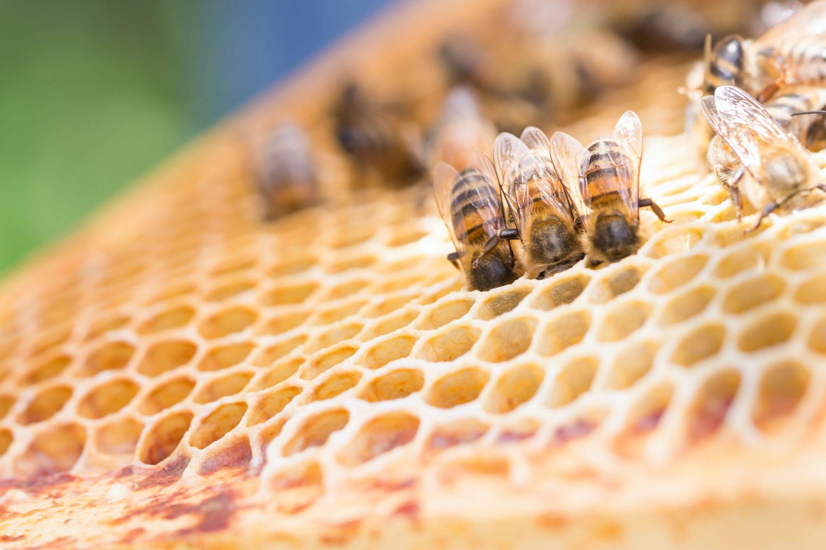 Le bourdonnement des abeilles – Manifeste des Gilets Jaunes Autonomes pour une écologie sensible.