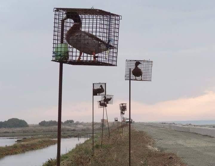 Lorsqu'ils viendront abattre en plein vol le parti des oiseaux…
